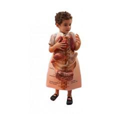 Avental Corpo Humano
